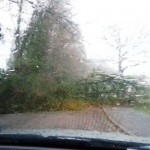 Tree Blocking Road Near Tesco River Way