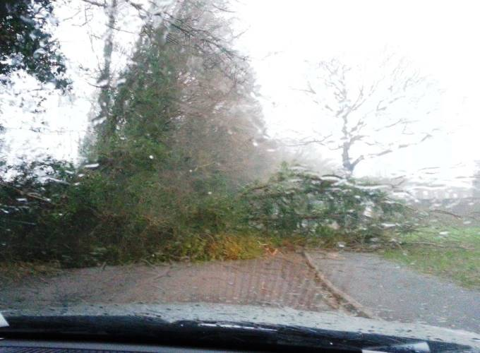Fallen Tree Near Tesco Andover