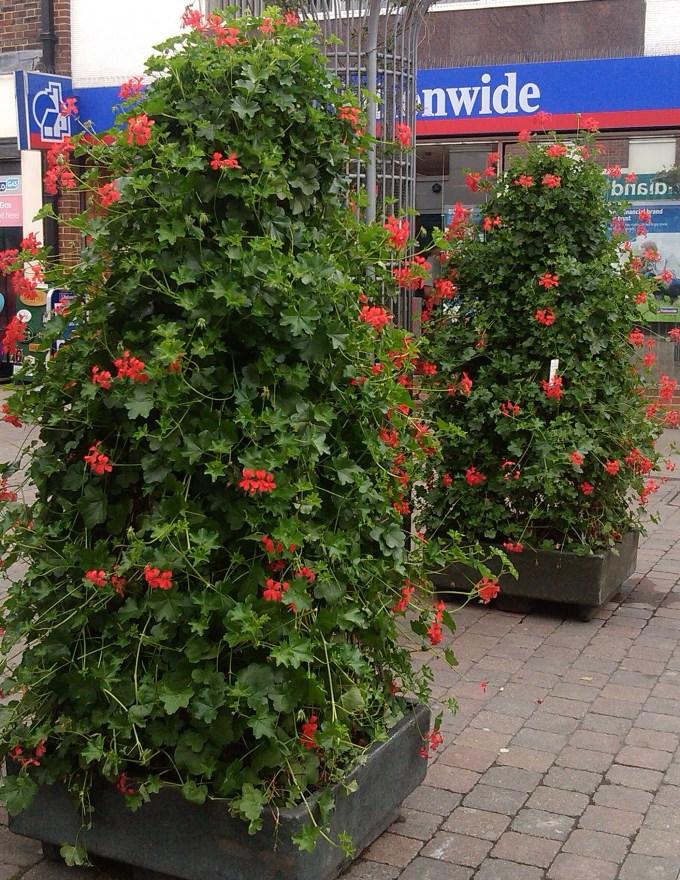 High Street Plants1
