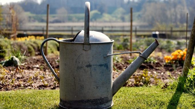 Allotment and Watering Can
