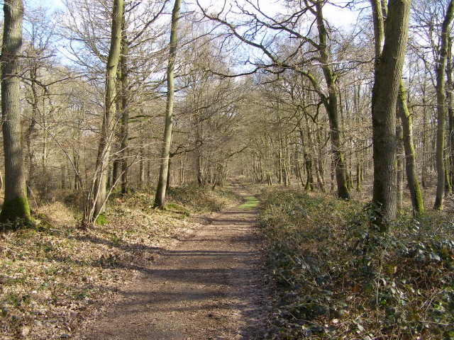 Course of the Roman road through Harewood Forest