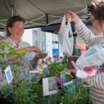 Andover Farmers Market Returns This Sunday